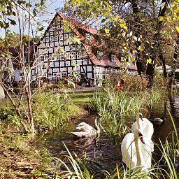 Springbach-Muehle-Belzig-Garten-401552.jpg