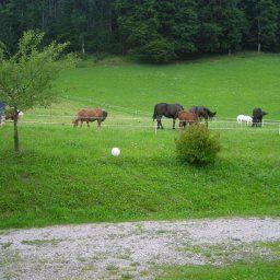Bauernhof_FerienwohnungenPonyreitenPferdeschlitten-Faistenau-Info-19-435401.jpg
