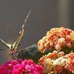 Casa_Mirabile_Relais-Menfi-Garden-3-450819.jpg