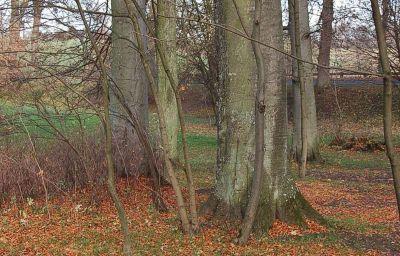 Pod_Klobukiem_Zajazd-Maldyty-Garden-2-407954.jpg