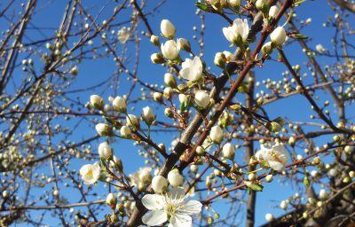 Hilpold_Pension-Lana-Garden-2-412279.jpg