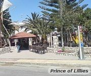 Prince of Lillies