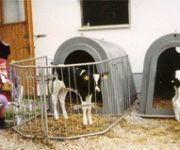 Bauernhof Maislbauer
