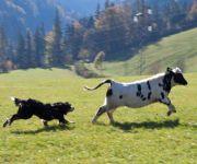 Urlaub zu jeder Jahreszeit Bauernhof Rettenbachgut