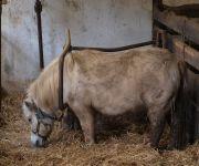 Bauernhof Koller´s Ferienparadies