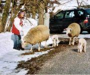 Bauernhof Baby&Biobauernhof Pernkopf -Familienurlaub-wandern