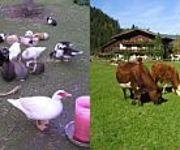 Bauernhof Farmauhof