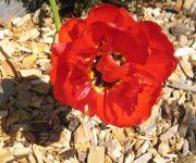 Bauernhof Familie Sepp und Sabine Köck vlg. Tonibauer