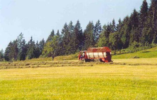 Bauernhof Abenteuer - für Baby und KINDER HinterreithHof
