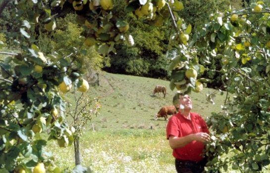 Bauernhof Silberschneider