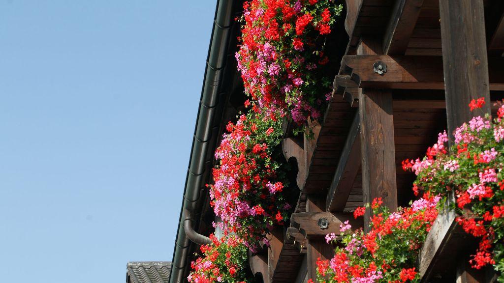 Neuer am See Prien am Chiemsee Aussenansicht - Neuer_am_See-Prien_am_Chiemsee-Aussenansicht-2-88816.jpg