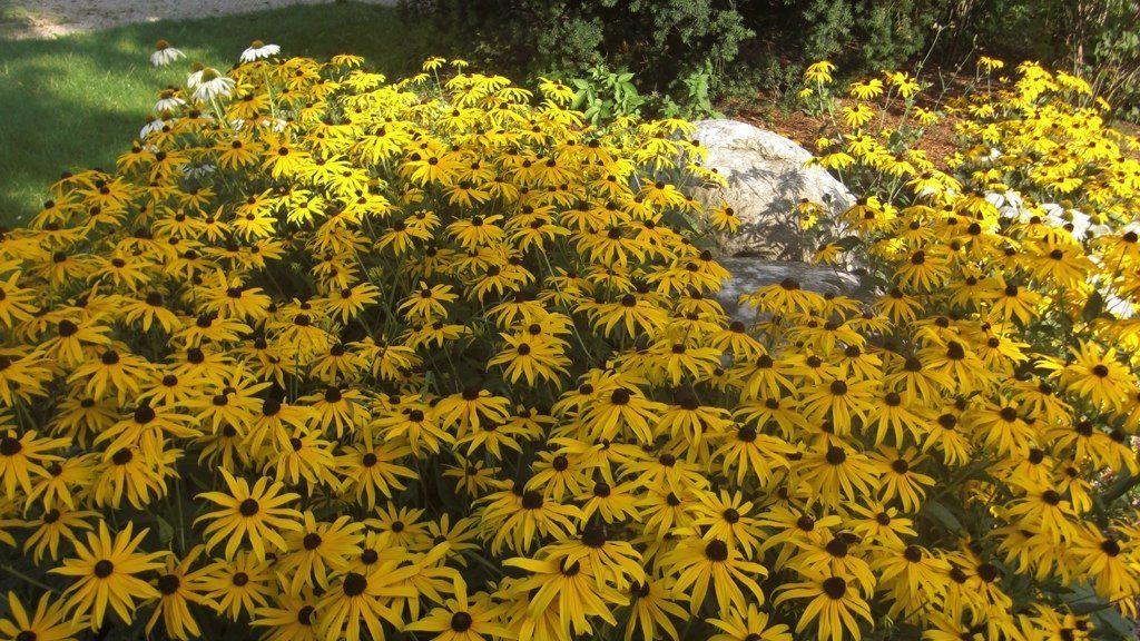 Sonnenhof im Gruenen Timelkam Garten - Sonnenhof_im_Gruenen-Timelkam-Garten-2-465525.jpg