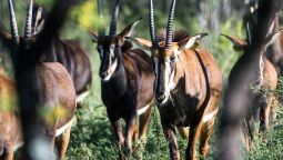 Hotel Bushwa Game Lodge - Vaalwater