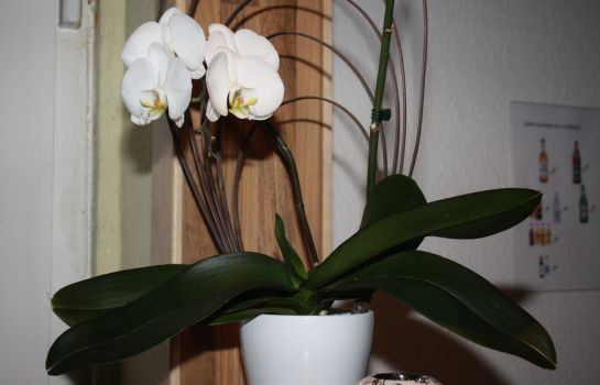 Empfang Orchidee