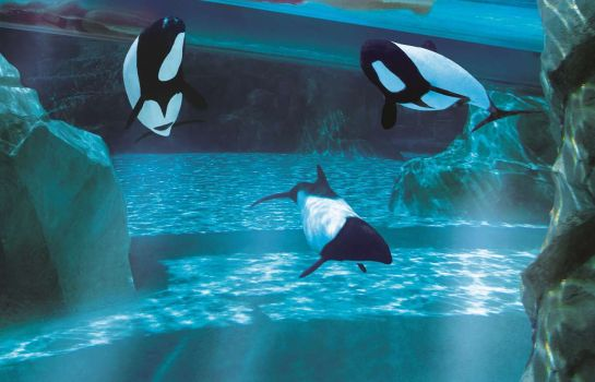 Info DoubleTree by Hilton Orlando at SeaWorld