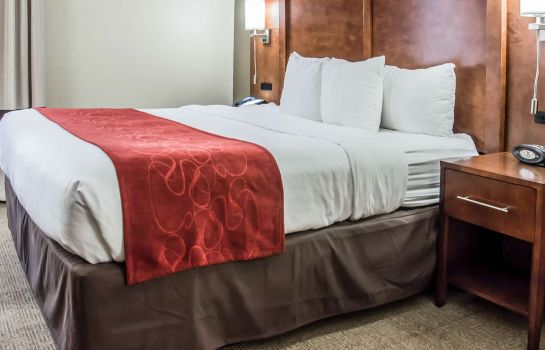 Chambre Comfort Suites University - Research Par