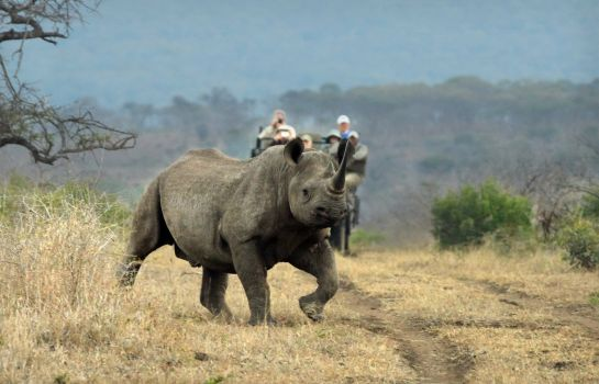 Information Thanda Safari