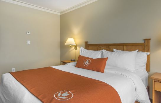 Kamers Quality Inn & Suites Amsterdam