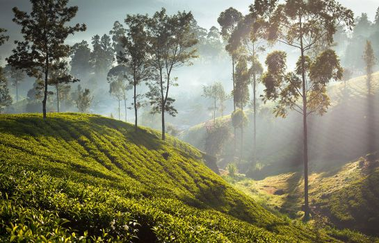 Info Ceylon Tea Trails