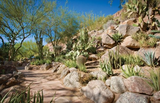 Info The Canyon Suites at The Phoenician a Luxury Collection Resort Scottsdale